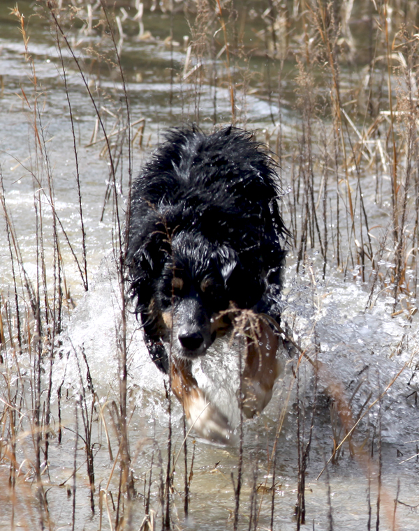 Small Water Dog Dog Breeds Picture